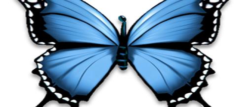Reflection – Chasing Butterflies